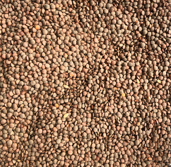Organic whole red lentils