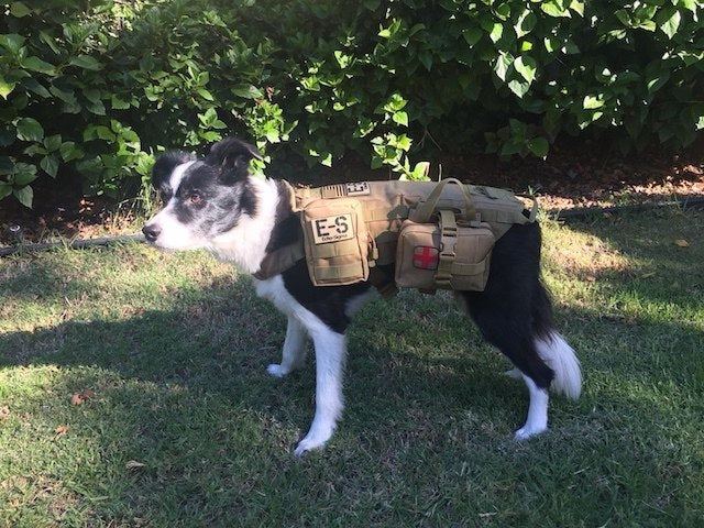 "Echo-Sigma ""Dog Pack"" Emergency Kit"