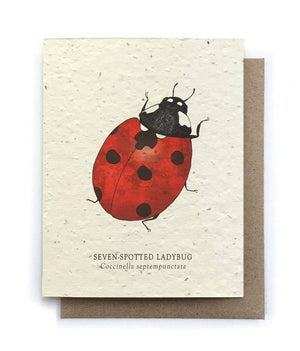 The Bower Studio - Ladybug Insect Greeting Cards - Plantable Seed Paper