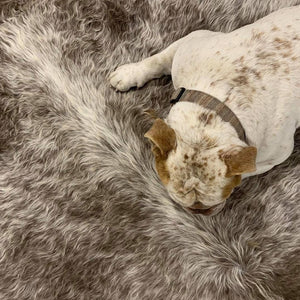 Cleaning, Care, and the Natural Appeal of your Cowhide Rug