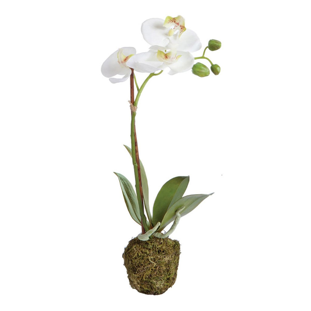 "15"" Phalaenopsis Drop-in Orchid"