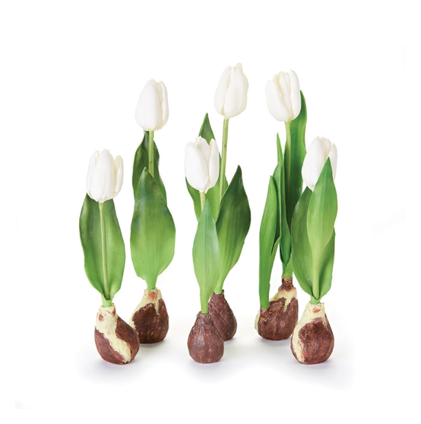 Standing Tulips with Bulbs