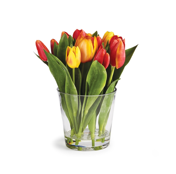Dutch Tulip in Vase