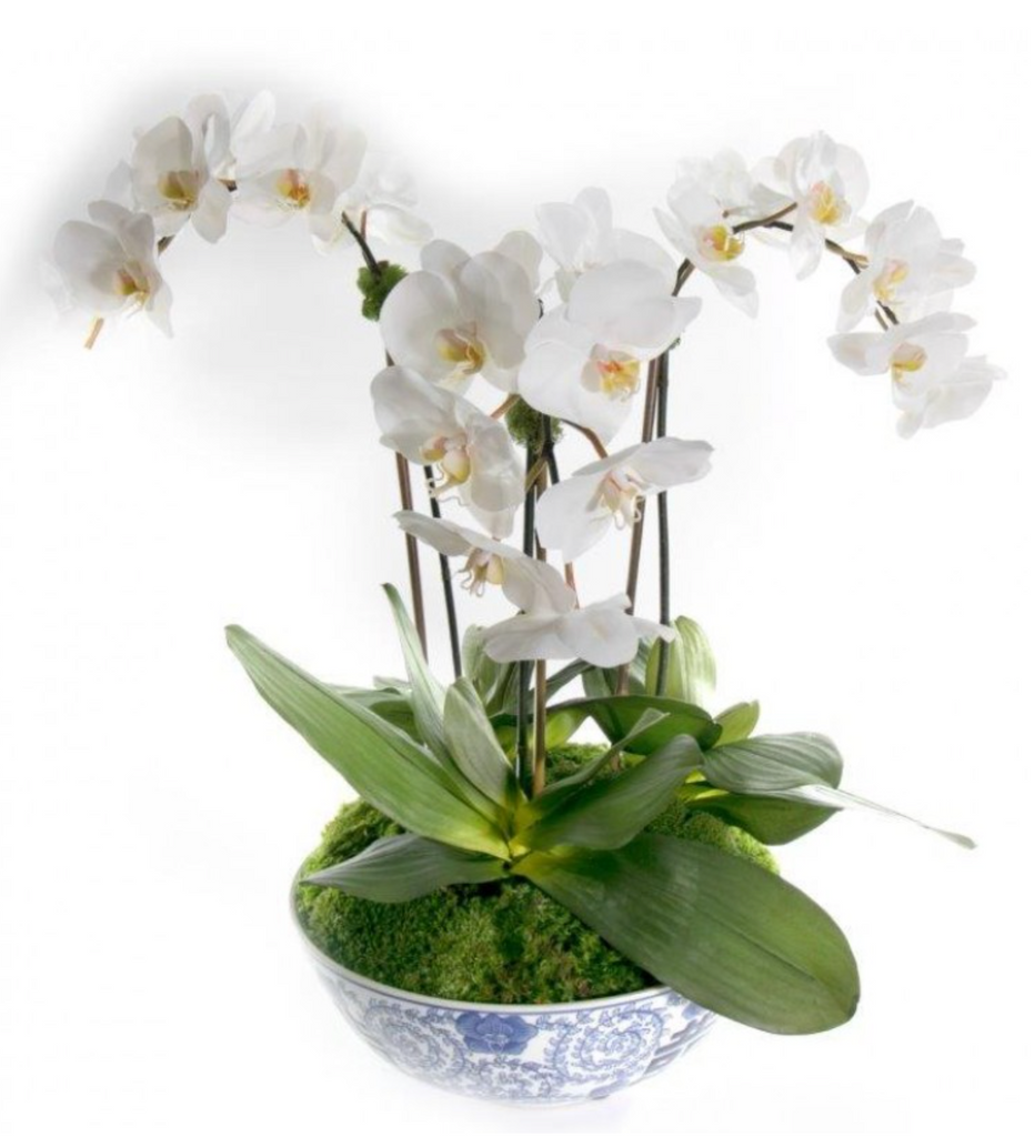 "31.5"" Phalaenopsis Bowl Drop-in"