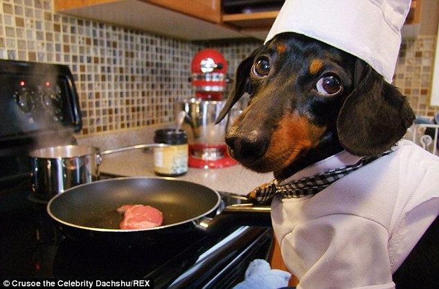 Be a personal chef for your dog!