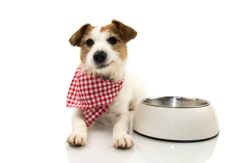 Serve fresh food on a budget and improve your dog's health!