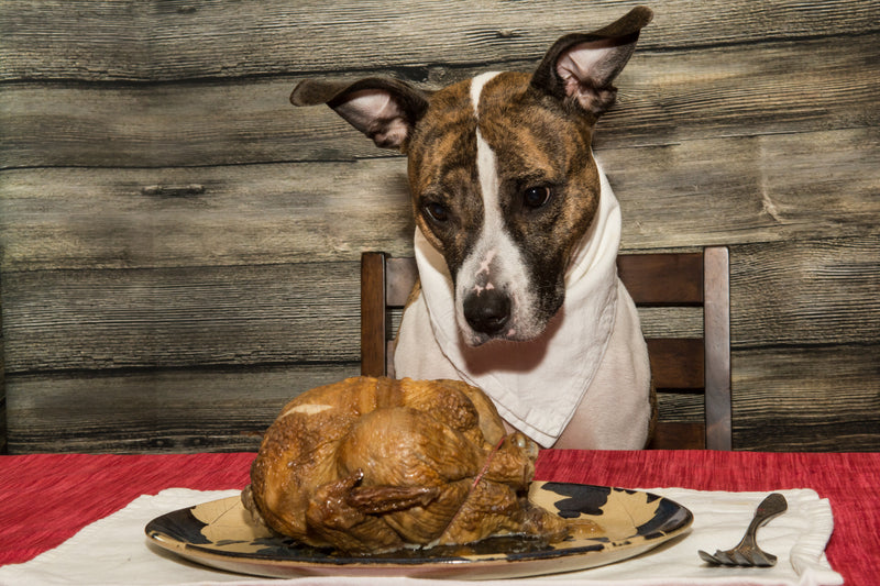 What NOT to feed your dog this Thanksgiving!
