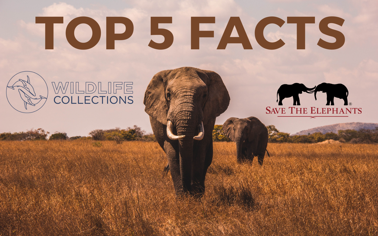 top five facts unforgettable facts about elephants