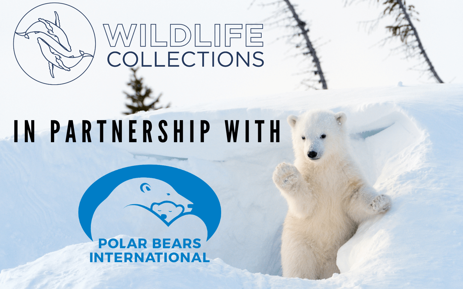 Wildlife Collections in Partnership with Polar Bears International