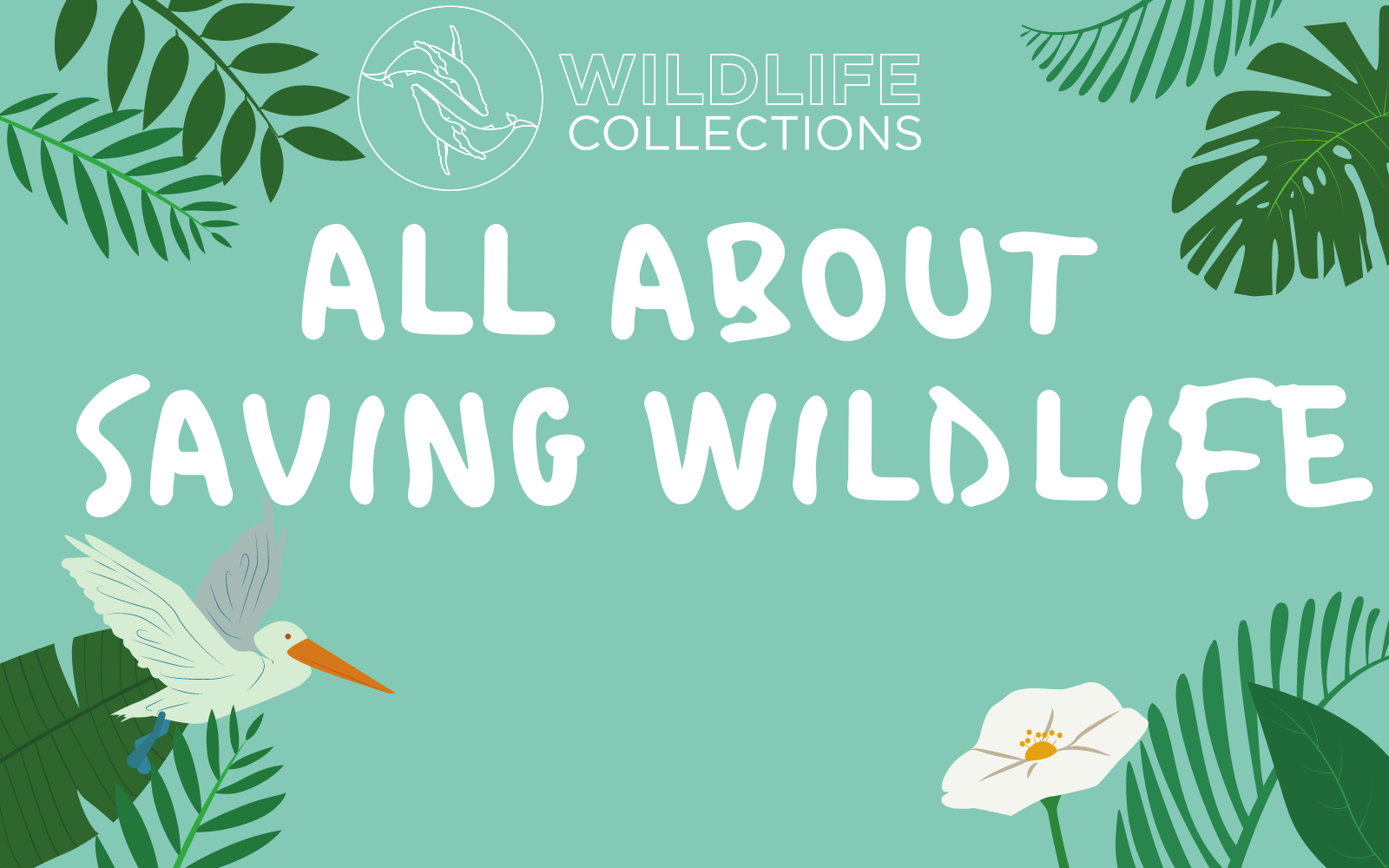 Wildlife collections is saving animals and spreading hope according to thrive