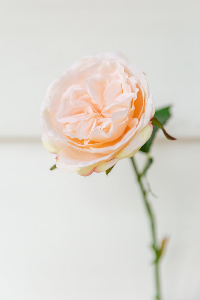 Garland Collection - Single Stem Set - Peach English Rose