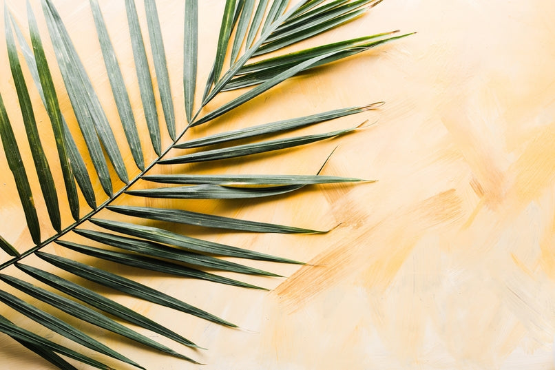 A palm Fern lying on a wooden background