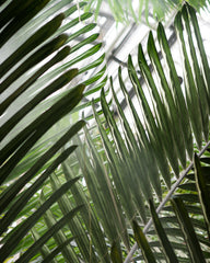 Tropical Palms 07