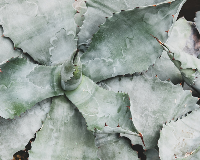 Succulent Composition 05