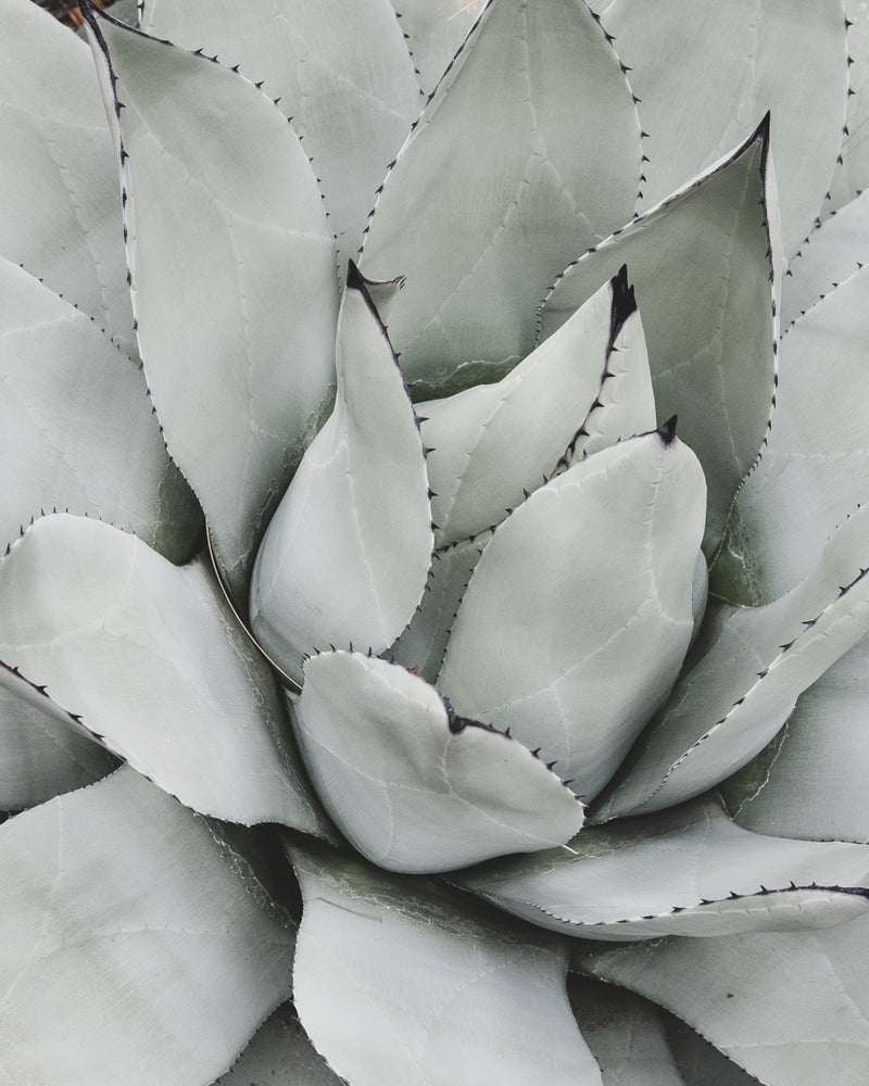 Succulent Composition 07
