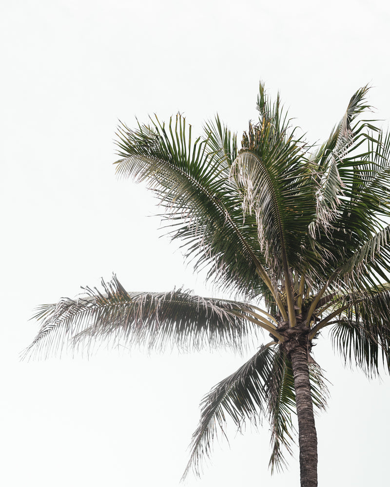 Tropical Palms 03