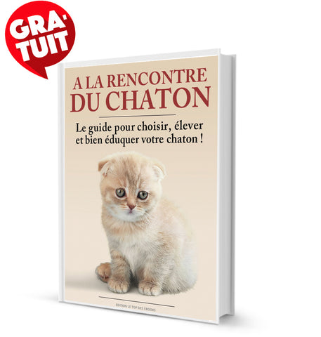 comment éduquer son chat