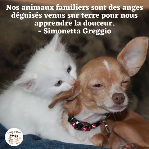 citation amour animal de compagnie