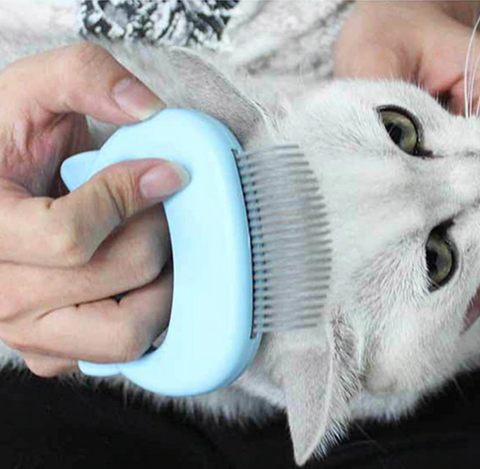 brosse ramasse poils pour chat