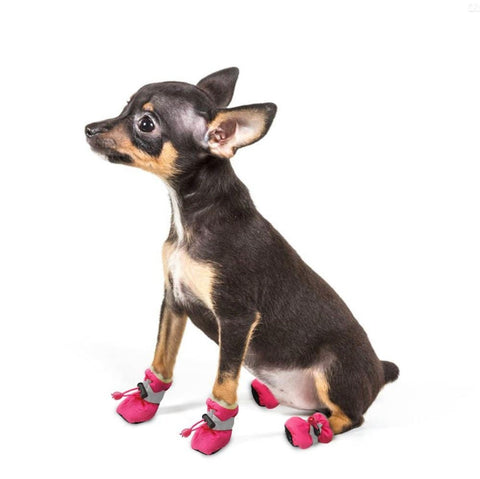 chaussures hiver chien