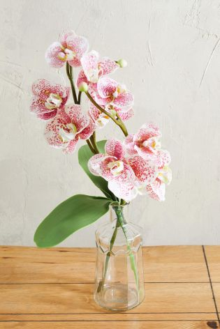 Blush orchid vase from Next