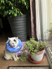 injured cat with soft collar around neck