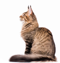Load image into Gallery viewer, side profile of tabby cat