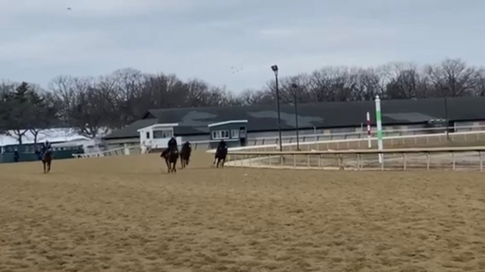 OTF Racing: Up For Adventure & Seahorse d'Oro breezing from the gate at Belmont.