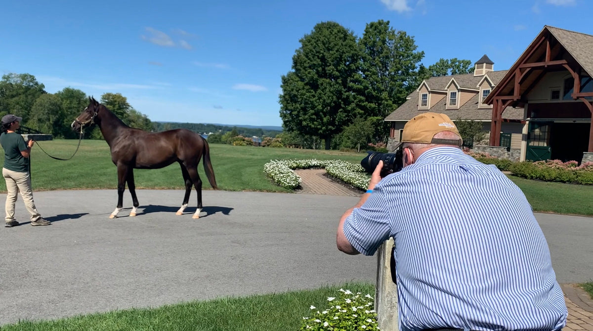 Docuseries: Road to the Yearling Sale, Episode 3