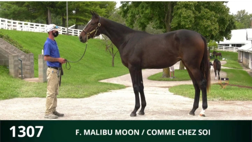 Keeneland September Yearling Sale | Hip 1307 | Filly | Malibu Moon x Comme Chez Soi | Consigned by Summerfield Sales