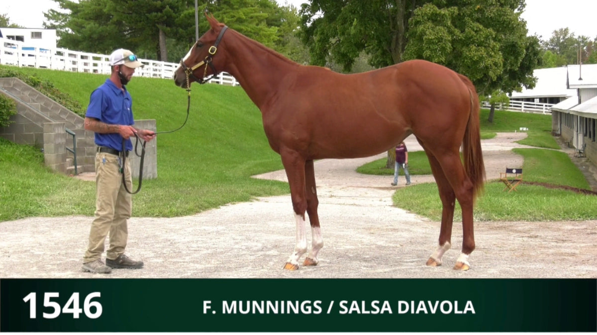 Keeneland September Yearling Sale | Hip 1546 | Filly | Munnings x Salsa Diavola | Consigned by Summerfield Sales