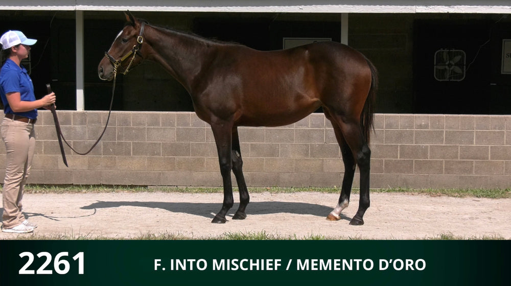Keeneland September Yearling Sale | Hip 2261 | Filly | Into Mischief x Memento d'Oro | Consigned by Summerfield Sales