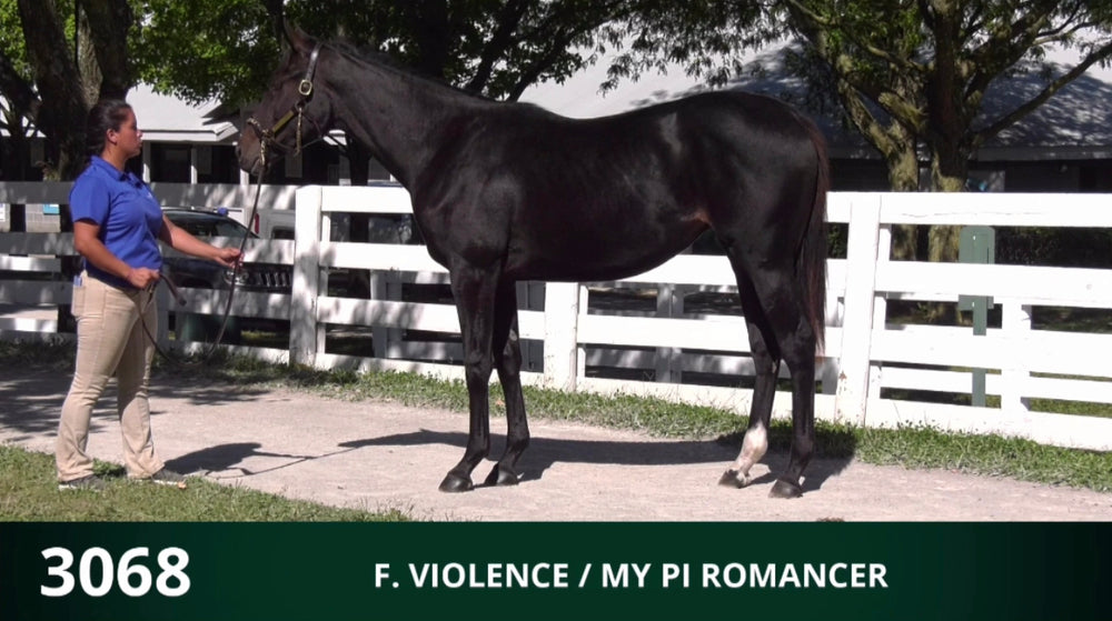 Keeneland September Yearling Sale | Hip 3068 | Filly | Violence x My Pi Romancer | Consigned by Summerfield Sales
