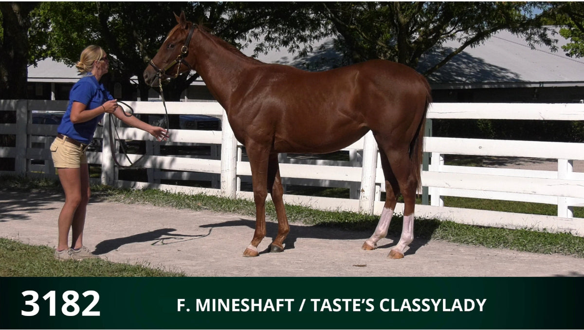 Keeneland September Yearling Sale | Hip 3182 | Filly | Mineshaft x Taste's Classylady | Consigned by Summerfield Sales
