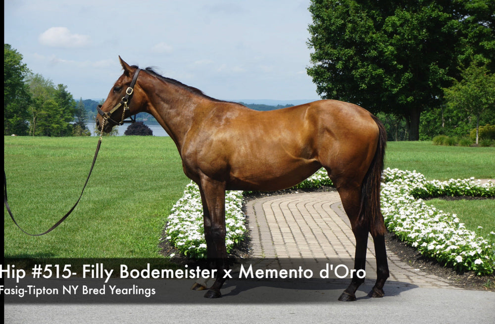 Fasig-Tipton NY Bred Yearlings Sale | Hip 515 | Filly | Bodemeister x Memento d'Oro | Consigned by Summerfield Thoroughbred Sales Agency
