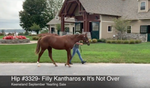 Keeneland September Yearling Sale | Hip 3329 | Filly | Kantharos x It's Not Over | Consigned by Summerfield Sales