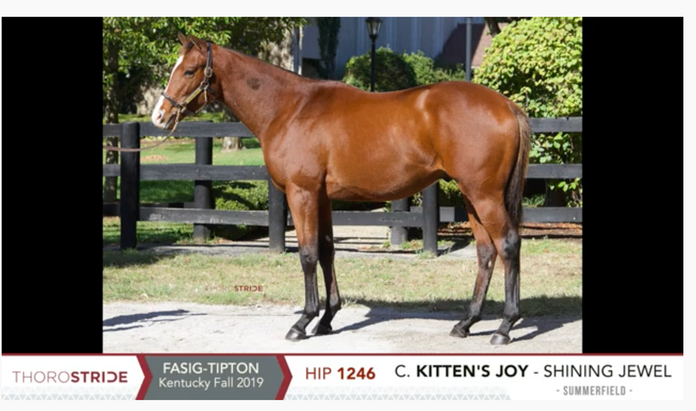 Fasig-Tipton Kentucky October Yearling Sale | Hip 1246 | Colt | Kitten's Joy x Shining Jewel | Consigned by Summerfield Thoroughbred Sales Agency