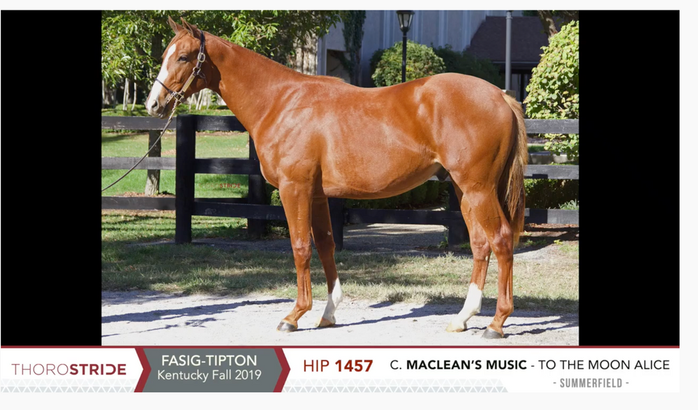 Fasig-Tipton Kentucky October Yearling Sale | Hip 1457 | Colt | Maclean's Music x To The Moon Alice | Consigned by Summerfield Thoroughbred Sales Agency