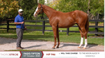 Fasig-Tipton Kentucky October Sale | Hip 946 | Colt | Will Take Charge x To The Moon Alice | Consigned by Summerfield Sales