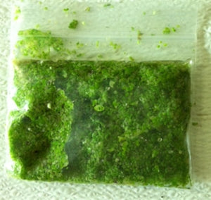 Duckweed (Lemna minor) 4 oz Portion