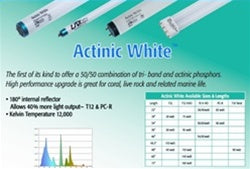 UV Lighting Actinic White T-12 Lamps