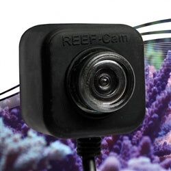 IceCap REEF-Cam Waterproof Live WIFI Streaming Video Camera