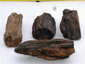 Petrified Wood per Pound