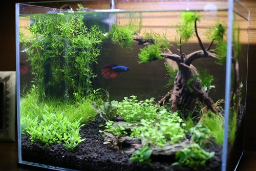 Custom Aquarium Aquascape Design Aquariumplants Com