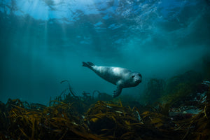 The art of being an underwater photographer in Pembrokeshire