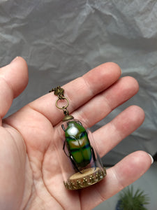 SALE Real Beetle Cloche Necklace - Minxes' Trinkets