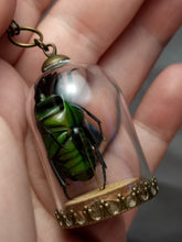 Load image into Gallery viewer, SALE Real Beetle Cloche Necklace - Minxes' Trinkets