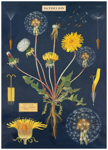 Wall Poster - Dandelion Chart