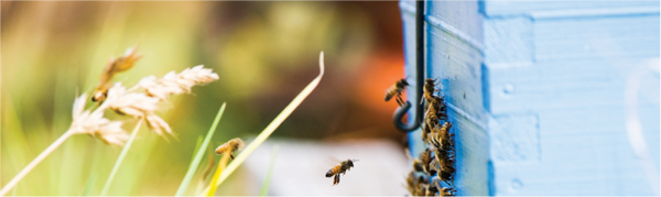Export and Bulk honey Sales - Southern Forests Honey