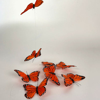 Monarch Butterfly String